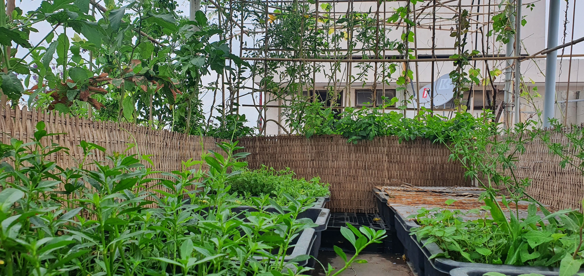 Teacher 8X created a beautiful, lush vegetable garden in the heart of Ho Chi Minh City by himself - photo 3