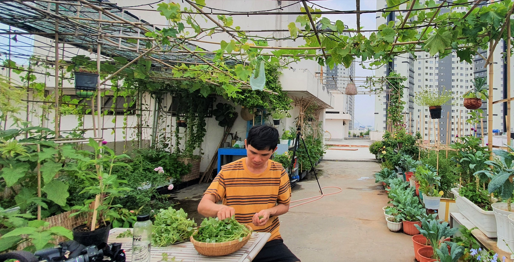 Teacher 8X created a lush and poetic vegetable garden in the heart of Ho Chi Minh City - photo 1