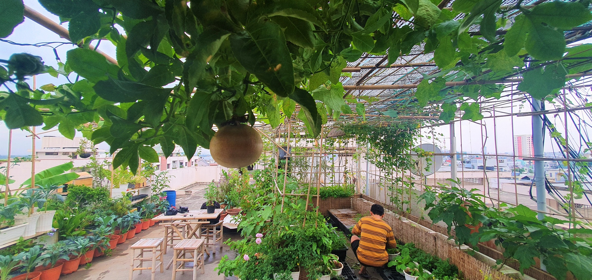 Teacher 8X created a beautiful, lush vegetable garden in the heart of Ho Chi Minh City by himself - photo 7