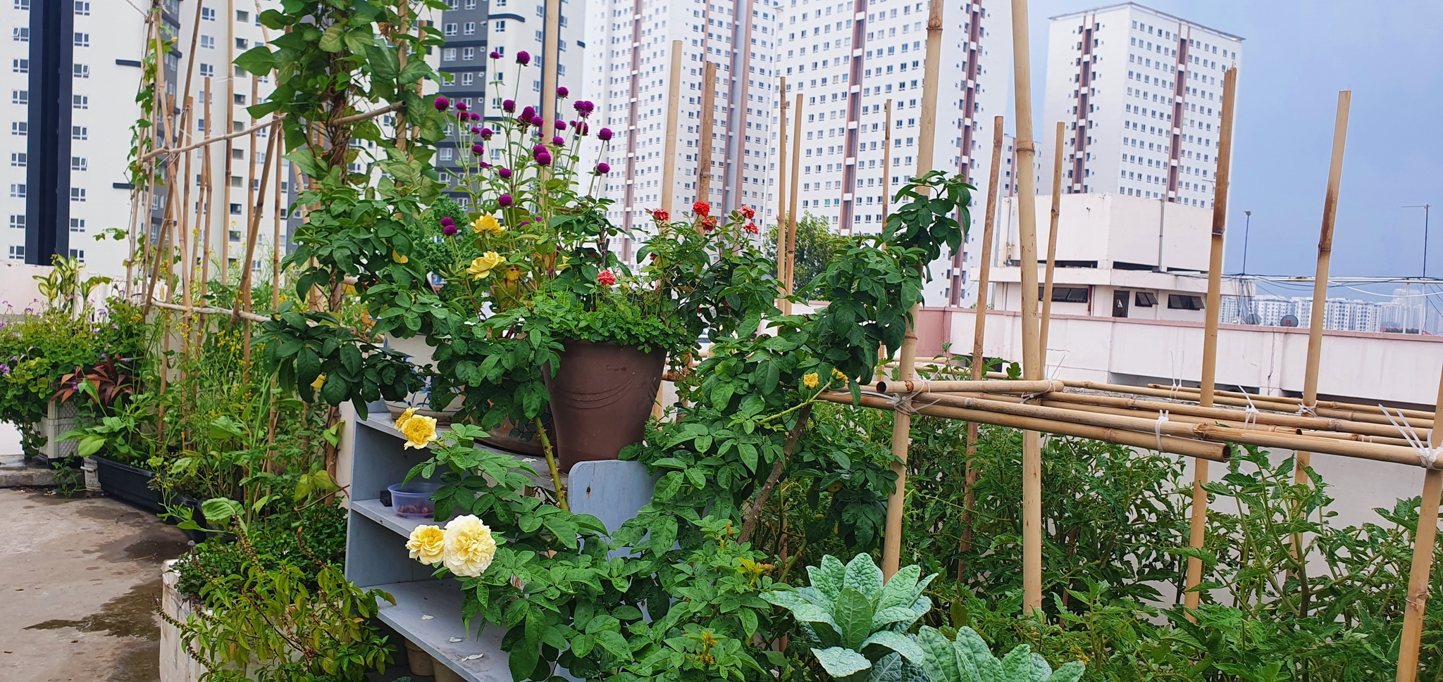 Teacher 8X created a beautiful and lush vegetable garden in the heart of Ho Chi Minh City by himself - photo 12