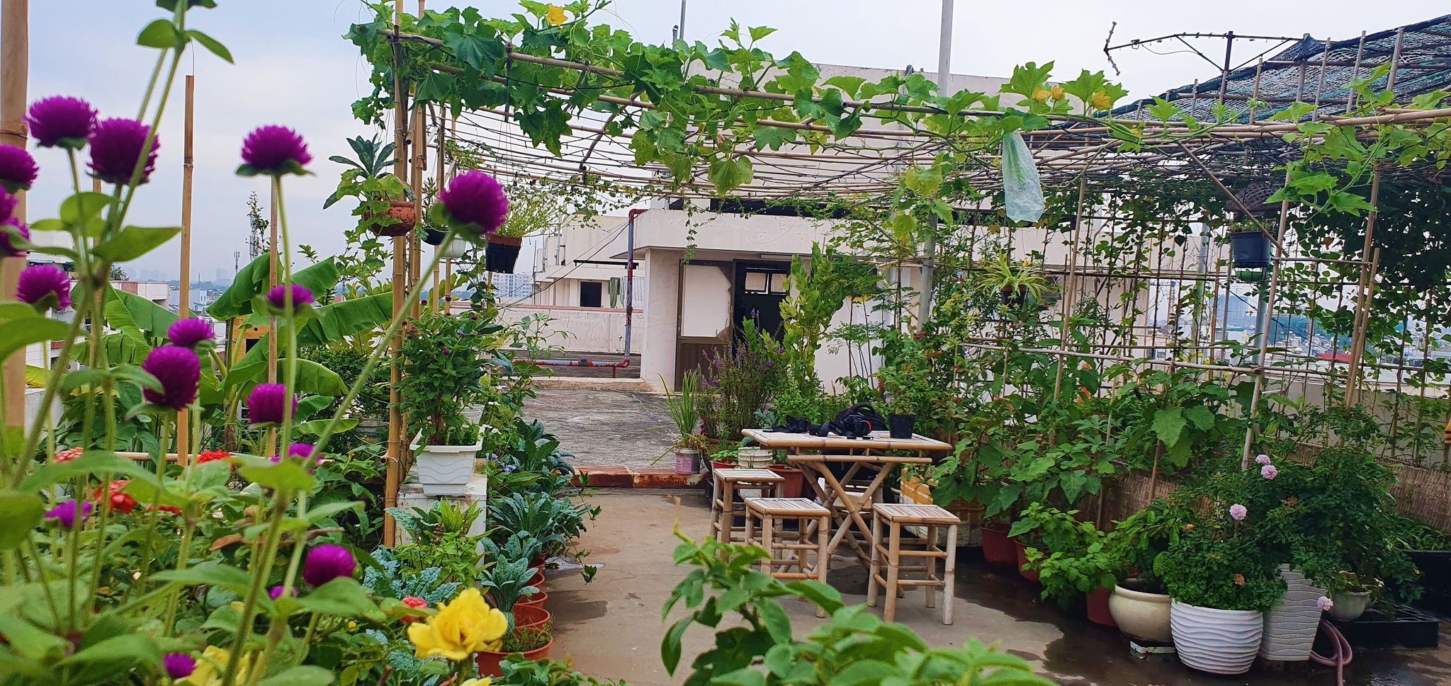 Teacher 8X created a beautiful, lush vegetable garden in the heart of Ho Chi Minh City by himself - photo 4