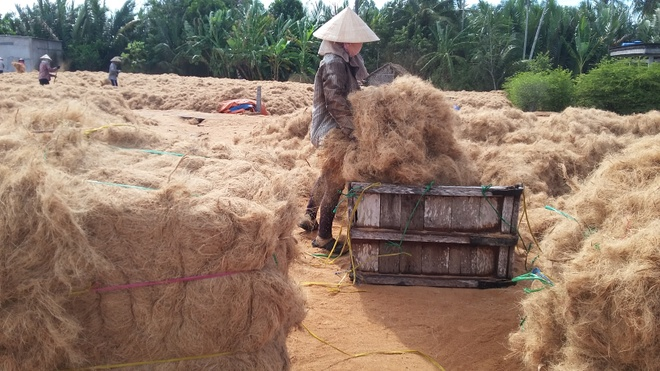 Coconut fiber is also an export item - Photo: Chi Nhan
