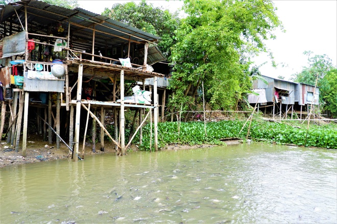 Thousands of natural pangasius fish came to the 'upland' house in the West - photo 1