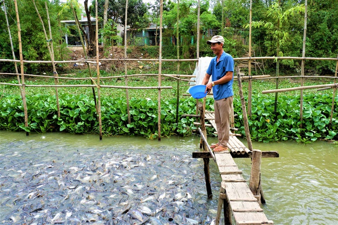 Thousands of natural pangasius pangasius flocked to the Western people's house - photo 3