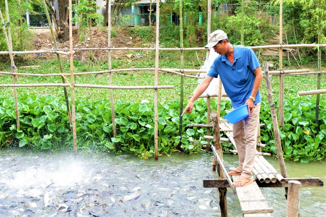 Thousands of natural pangasius fish came to the Western people's house - photo 4