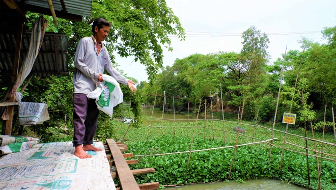 Thousands of natural pangasius fish came to the Western people's house - photo 5