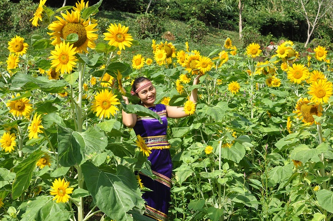 Tourists at the sunflower garden are glowing with gold /// Photo: Yang Bay