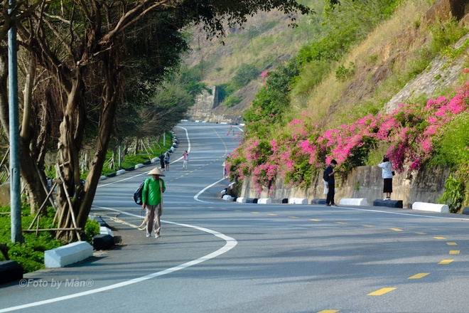 Fall in love with the beauty of the 'most beautiful' confetti road in Da Nang - photo 1