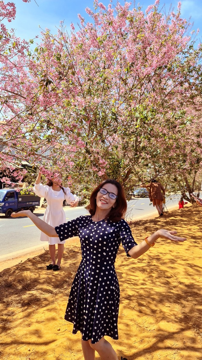 Da Lat has brilliant pink cherry blossoms when Tet is coming - photo 11