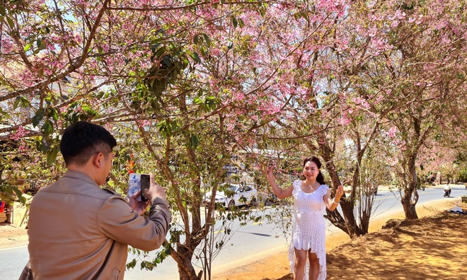 Da Lat has a brilliant cherry blush when Tet is coming - photo 8