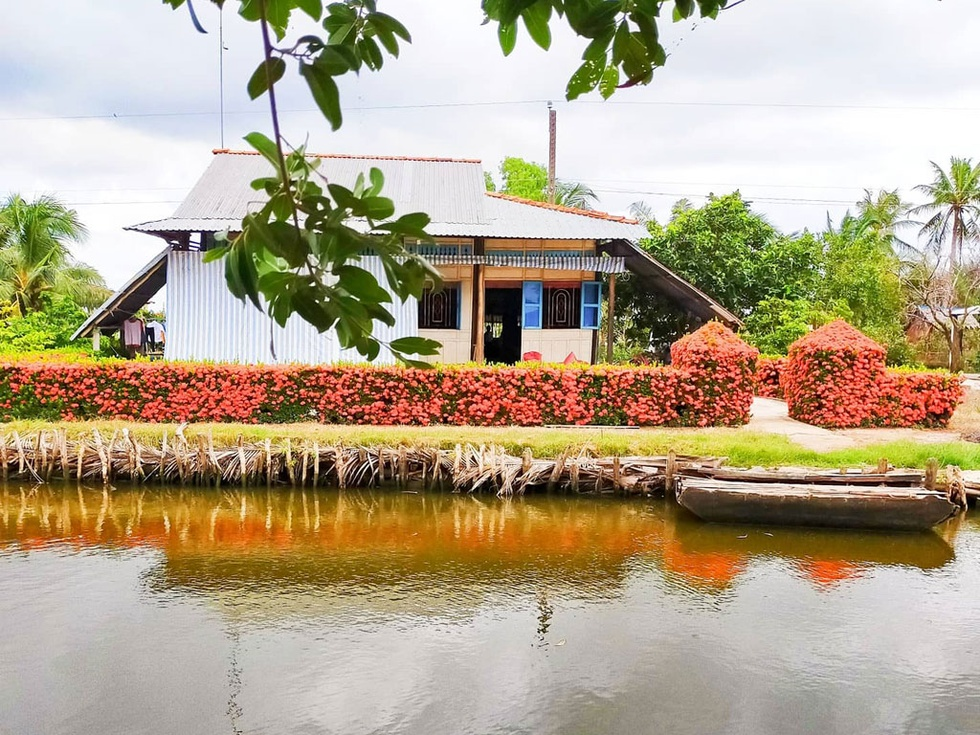 The flower fence of the farmer in the area shines brightly in a corner of the river /// Photo: THANH NHANH