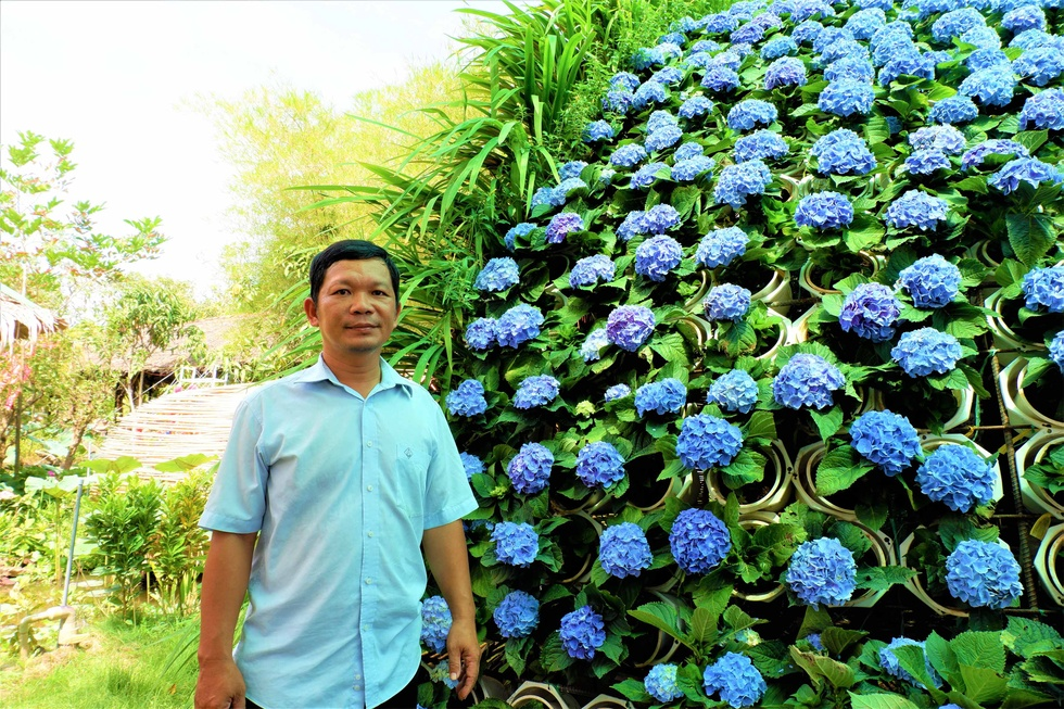 Admire the most 'huge' 14m diameter hydrangea bouquet in the West - photo 2