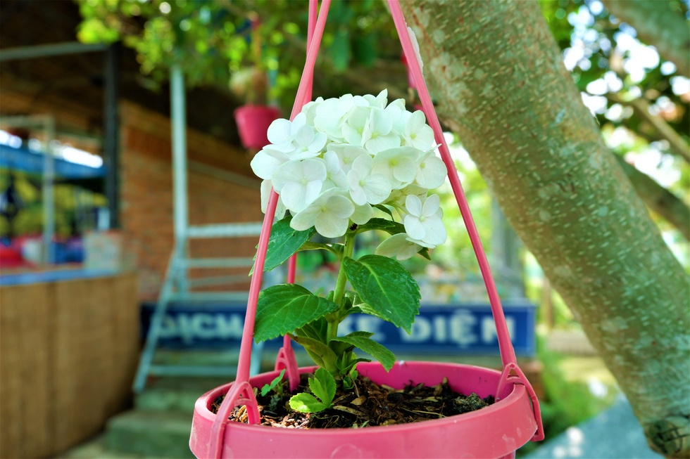 Admire the most 'huge' 14m diameter hydrangea bouquet in the West - photo 7
